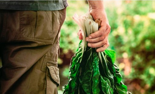 Don't Let Small Manufacturers Go the Way of the Small Farmer