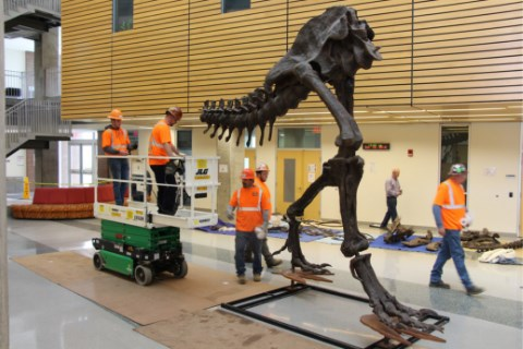 """Montgomery College's New T.Rex """"Stan"""" Featured by Bethesda Beat"""
