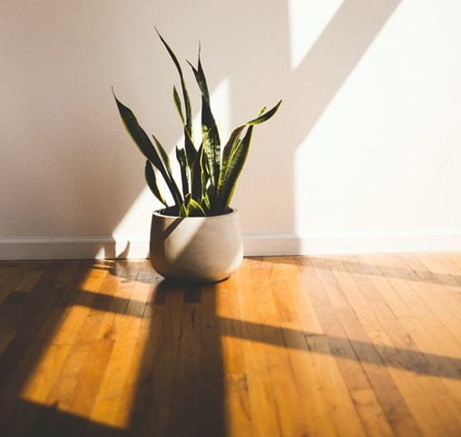 engineered wood floor with plant