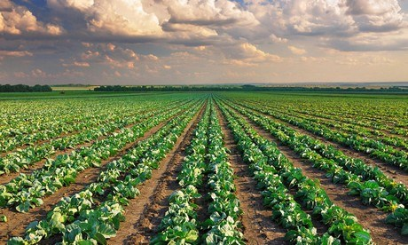"""""""Organic Production Cannot Feed the Whole World"""""""