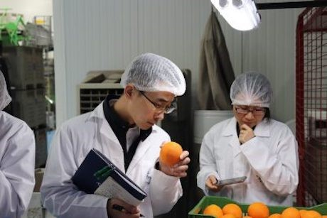 China Begins the Process of Opening Its Market to Chilean Citrus Fruit