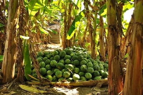 Weak Post-Harvest Technology Hinders Vietnam Fruit Sector