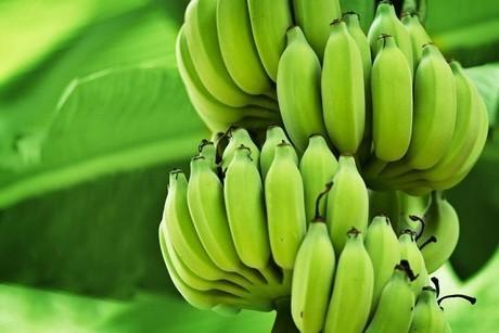 Ecuador: Aprobanec Proposes the Creation of the National Banana Institute