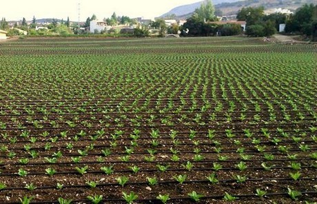 Andalusia Is Leading European Organic Producer, With 1 Million Hectares