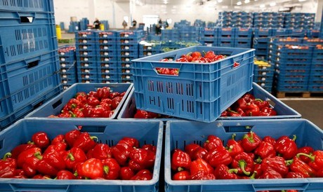 Sector Studies Opening of 17 New Markets for the Export of Spanish Horticultural Products