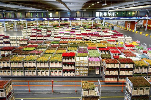 Flower Shipments Bloom for Miami Port