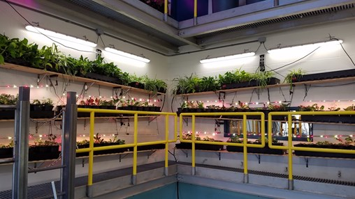 Aquaponics in the Classroom Sets up Students for a Growing Industry
