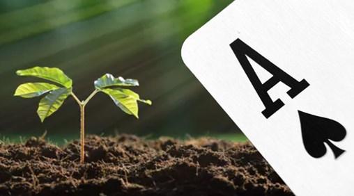 Mycorrhizae as a soil amendment