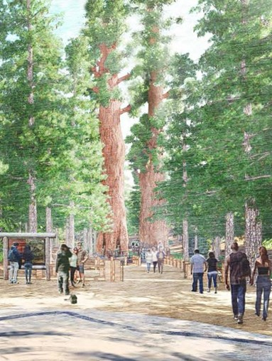 New Mariposa Grove Protects Fragile Giant SequoiaEcosystem