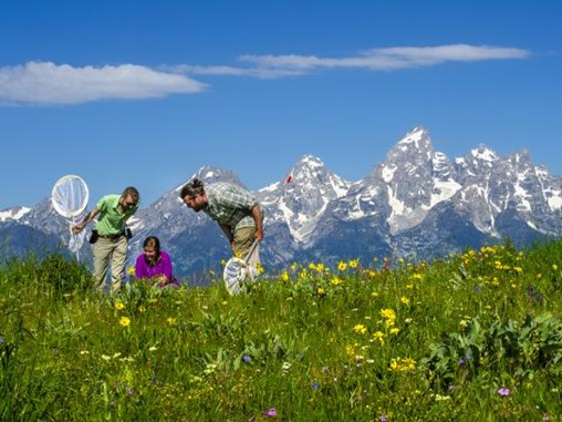 Montana State Research Ties Butterfly Population to Mountain Systems Ecology