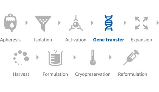 Illustration show the steps in the general workflow of cell processing gene transfer.