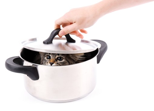 Marketing jargon buster - cat in soup