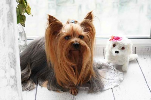 Mobile Pet Grooming Industry Shifts Into High Gear