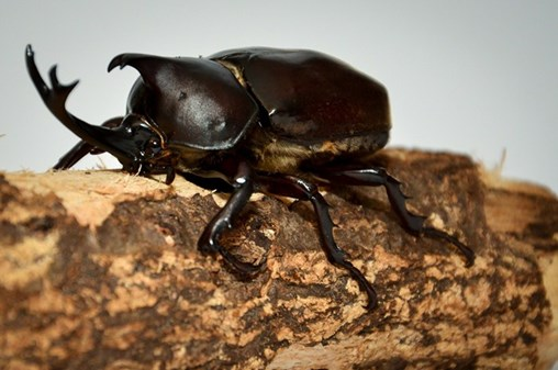 Pests or Pets? How Cultural Attitudes Frame the Way We Treat Beetles