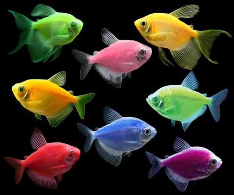 GloFish Brand of Spectrum Brands Pet LLC Expands Fluorescent Fish Offerings in Canada